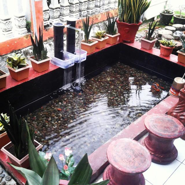 Kolam Ikan Minimalis Sidoarjo di Lahan Sempit